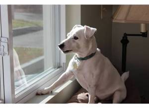 Archie keeping watch over the neighborhood, ready to warn us of the slightest movements.