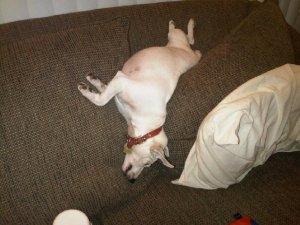 Sleeptime acrobat.